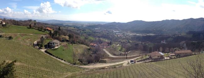 Vigneto Polisena - Azienda Agricola Tosca