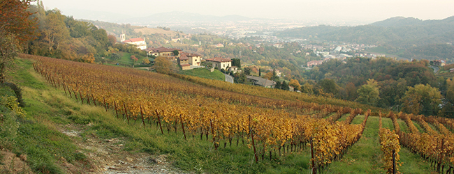 colli vineyard