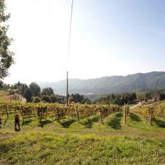 Vigneto Polisena_1 - Azienda Agricola Tosca