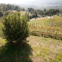 Vigneto Polisena_7 - Azienda Agricola Tosca