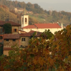 colli vineyard